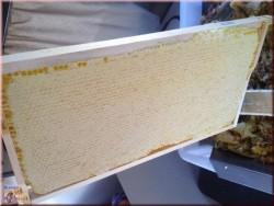 Miel de lavande nid d'abeille 2018 (environ 2,5-3 kg)