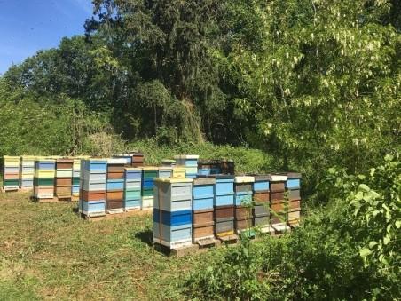 """""""Acacia"""" beekeeper-honey 2018 (500g.)"""