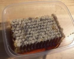 قرص العسل الكستنائي (كستناء حلو حوالي 125 جم)