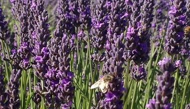 Miel naturel et produits apicoles